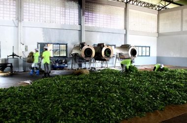 โรงงานผลิตชา